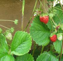 summer_garden_small